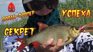 ПОПЛА-ПОППЕР - как поймать крупную красноперку. СЕКРЕТЫ ловли ТРОФЕЙНОЙ рыбы.