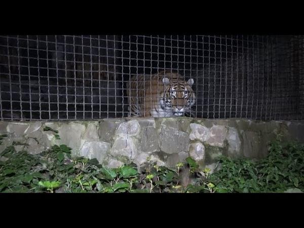 Ніч у зоопарку влаштували для рівнян та гостей міста