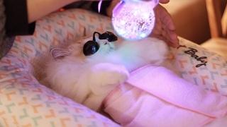 Лучшее лазерное лечение! | Спа для кошек