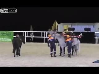 Cavalo de primeiros socorros