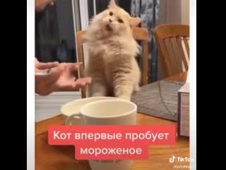 Кот пробует мороженное в первый раз))
