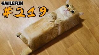 КОТЫ 2019 Смешные коты приколы с котами до слез – смешные кошки 2019 – Funny Cats