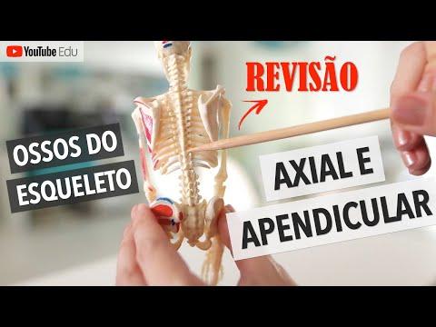 Ossos do esqueleto axial e apendicular REVISÃO Anatomia etc anatomia sistemaesqueletico