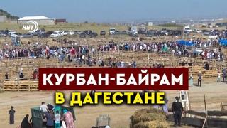 Курбан-Байрам в Дагестане. Мусульмане отмечают главный праздник Ислама