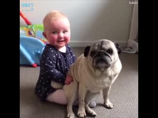 Смешные детки и животные