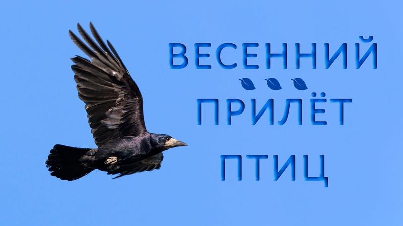 Какие перелётные птицы прилетают весной