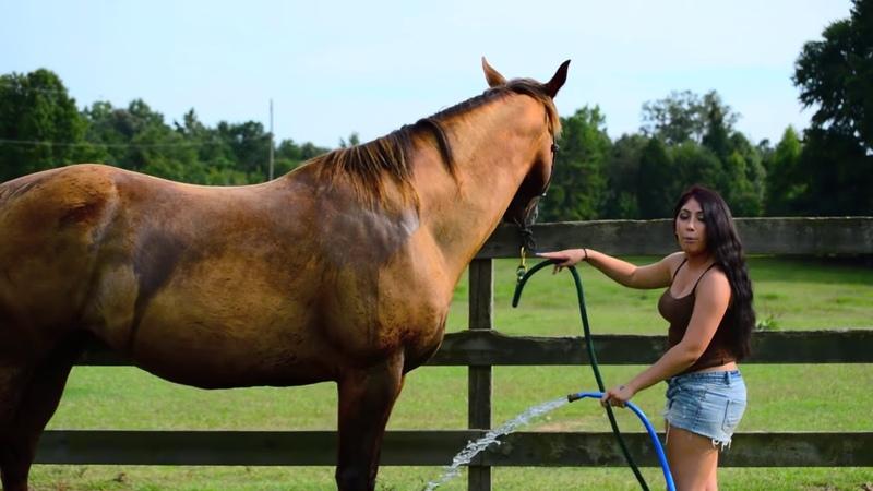 How to wash a nervous horse ponyboy