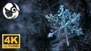 Шум Ветра Зимой Снегопад Пение Птиц 6 Часов Сна