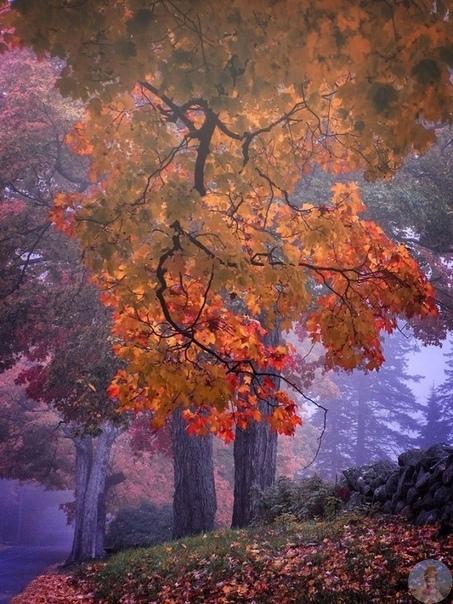 Чудесные цвета