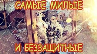 🐕🐈 Съездили в ПРИЮТ для БЕЗДОМНЫХ животных в Бресте. Помощь для брошенных СОБАК и КОШЕК
