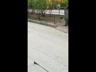 Неизвестные стреляют по птицам в Нижнем Новгороде - Типичный Нижний Новгород