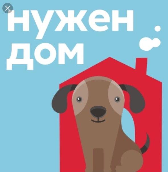 Пограничников россии, картинки собаке нужен дом