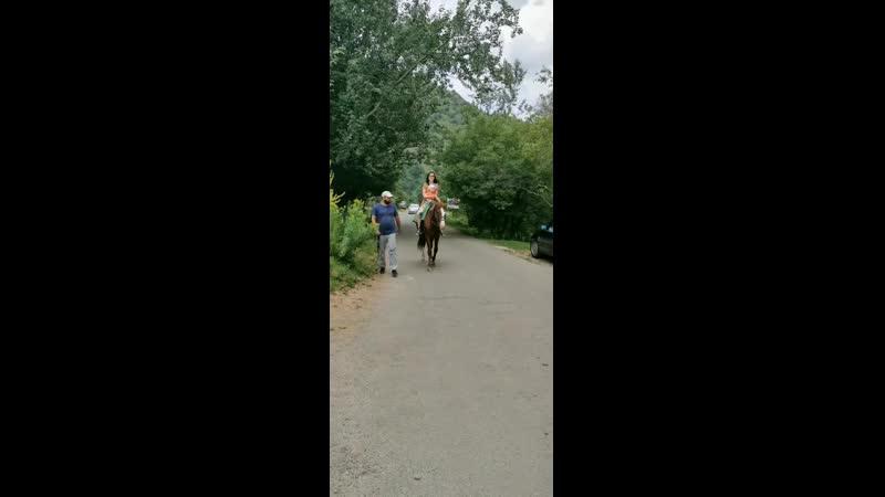 на конине