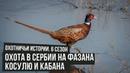 Охота в Сербии на ФАЗАНА, КОСУЛЮ и КАБАНА\ Охотничьи истории \ 4