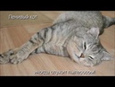 Веселые картинки. Самые ленивые коты. Самые ленивые кошки.