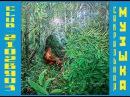 Shipibo shaman of Peru