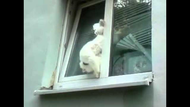 Запотевают окна в машине картинки тем