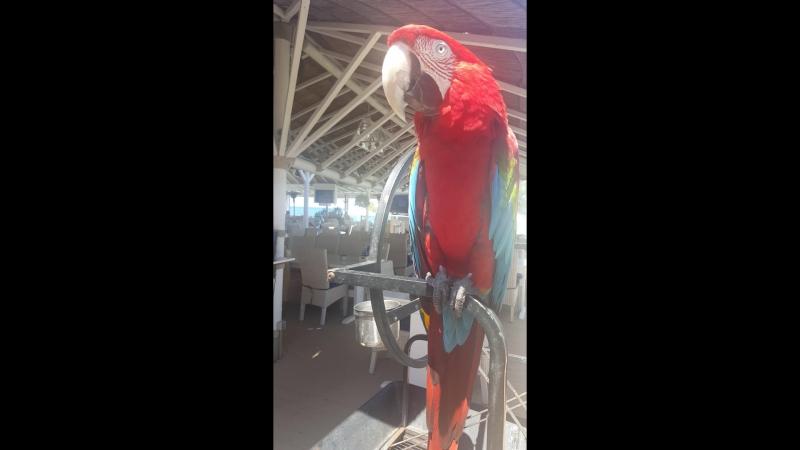 Красный попугая Red parrot Gouves Heraklion Crete
