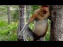 Самые смешные обезьяны с огромным носом. Funny monkey.