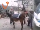 Дагестанцы заводят осла