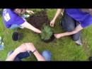 Appus садит деревья в парке Горького