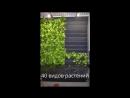 Greenwall Вертикальное озеленение Vertical Garden
