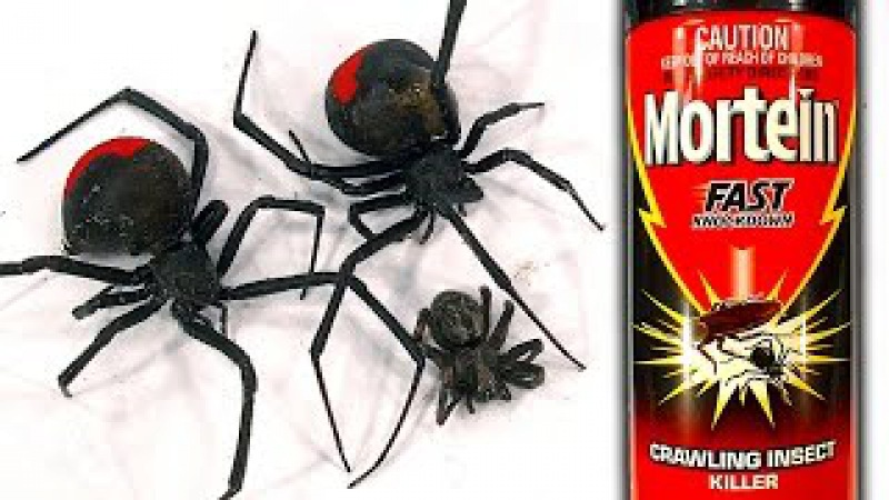 How To Kill Deadly Spiders FAST More Redback Infestation (Graphic Scary Video)
