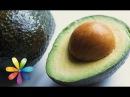 Как вырастить авокадо дома Все буде добре Выпуск 476 09 10 2014 Все будет хорошо