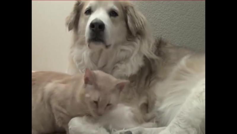 стало гифки собачки кошки нам поможем