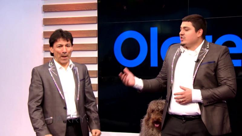 Olate Dogs On Harry