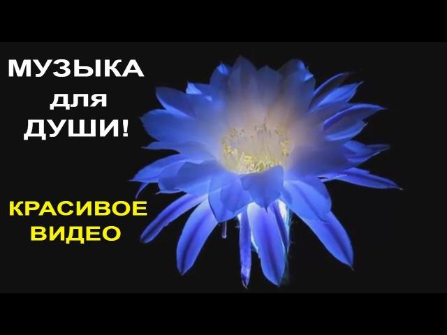 Музыка для Души Релакс Красивая Музыка Музыка в стиле Энигма