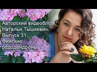 Авторский видеоблог Натальи Тышкевич. Выпуск 31. Финские рододендроны.