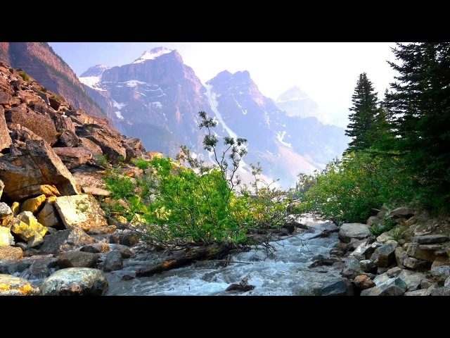 Relaxing River Sounds Gentle River Nature Sounds Singing Birds Ambience