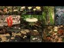 Яд. Достижение эволюции / Poison, an Evolutionary Mystery 3 из 3 2015 03. Ядовитая война растений и животных