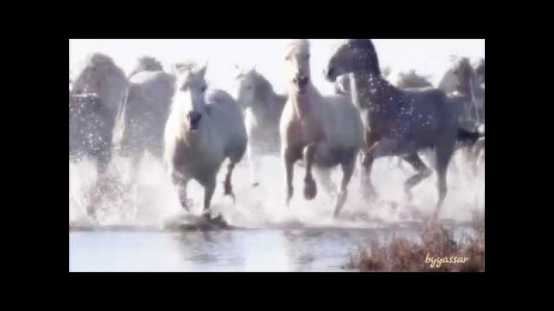 Aaja Bahon Me - Aamir Kangda | Arabic Instrumental