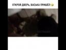 говорящий котэ))