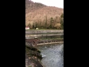 Форелевое хозяйство. Абхазия