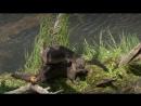 BBC Йеллоустоун Борьба за жизнь 2 Лето Документальный природа животные 2009
