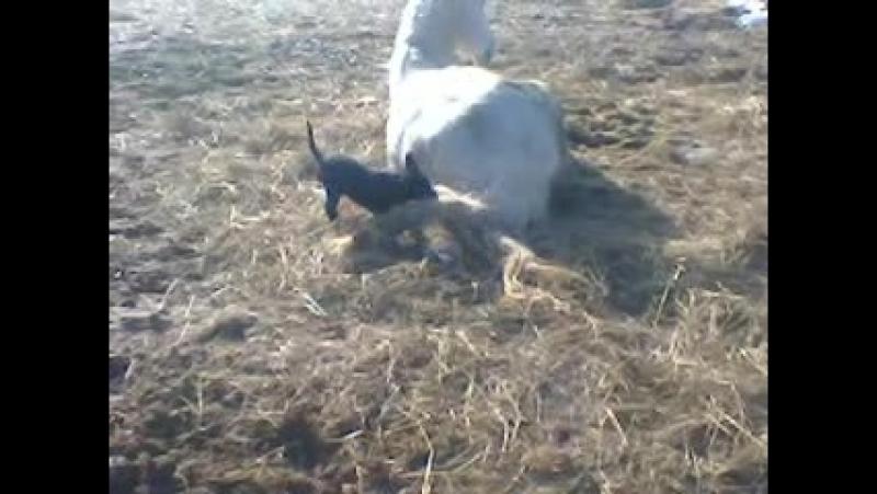 щенок и конь 1