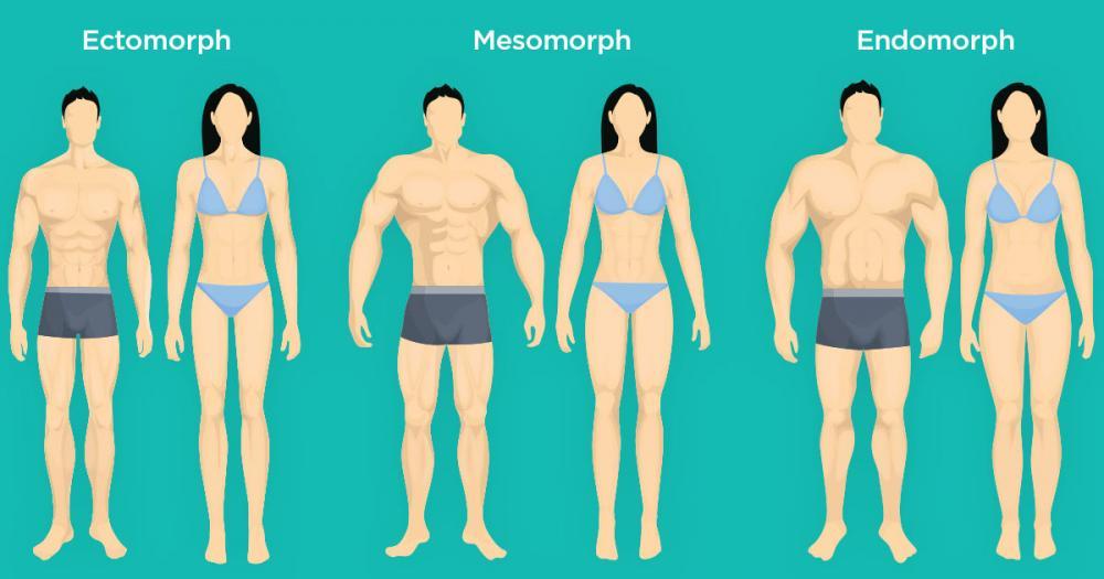 виды телосложения у мужчин названия картинки востребованы при ремонте