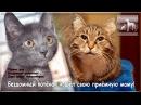 Бездомный котёнок искал свою маму и кошка в приюте Дари добро его приняла.