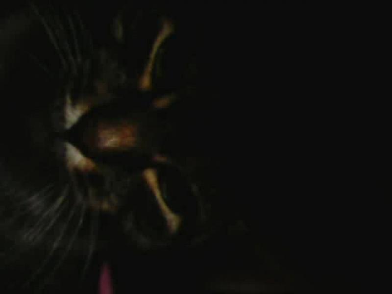 Моя Кошка просто класс