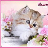 красивые открытки и картинки