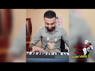 Пианист играет для своего кота #2