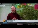 Украина 🇺🇦 и конопля 🌿 марихуана в законе