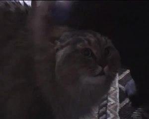 NONONONO - Э ну, э ну э ну! CAT
