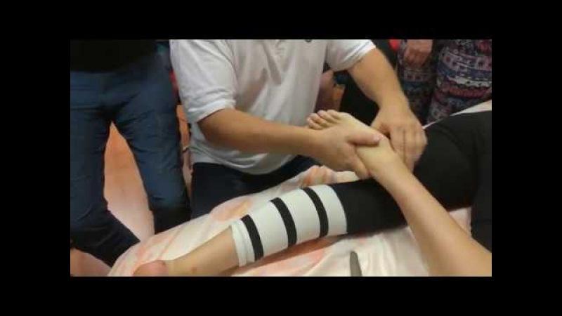 Анатомия и биомеханика стопы Ортопедический массаж ч 1