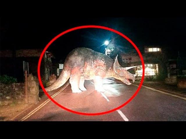 Dinozorlar Hala Var mı Kameraya Yakalandılar