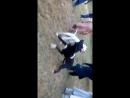 Булли кутта VS гуль донг