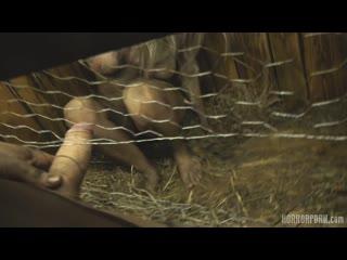 Horror Porn - Rabbit hutch
